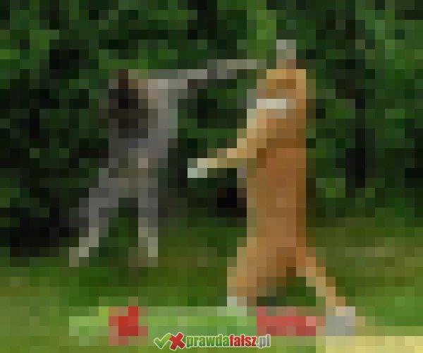 Koty i dziwne koty ...
