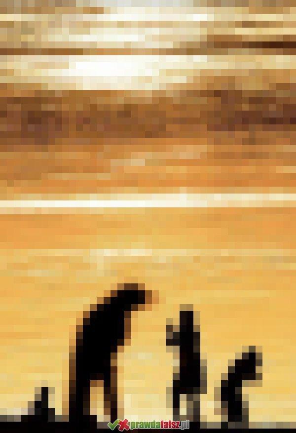 Zdjęcia z perspektywy