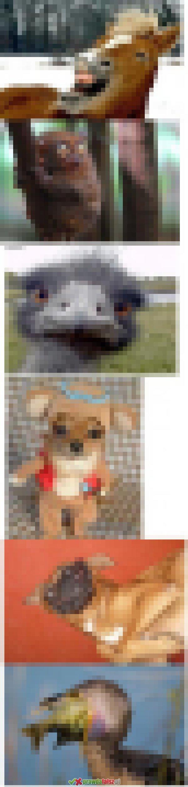 Czy te zwierzęta są prawdziwe?