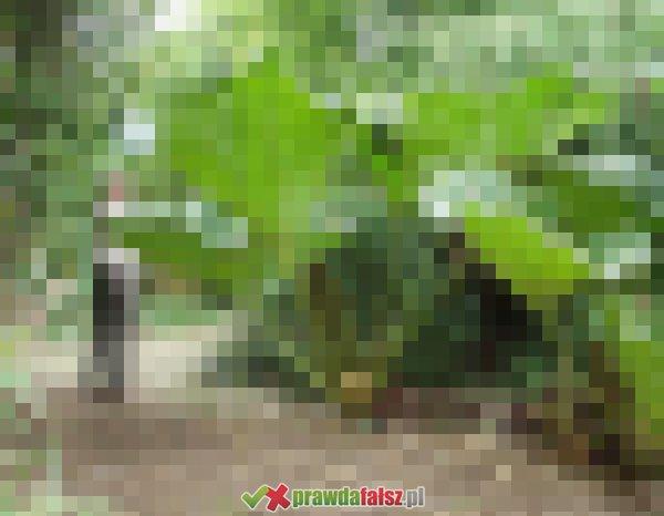 Przeogromne rośliny