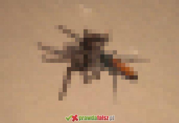 Największe robaki świata