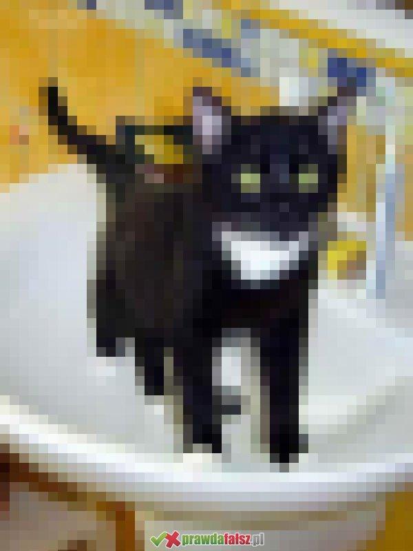 Dziwne koty