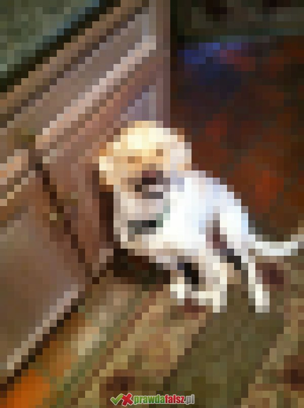 Zwierzaki na zdjęciach