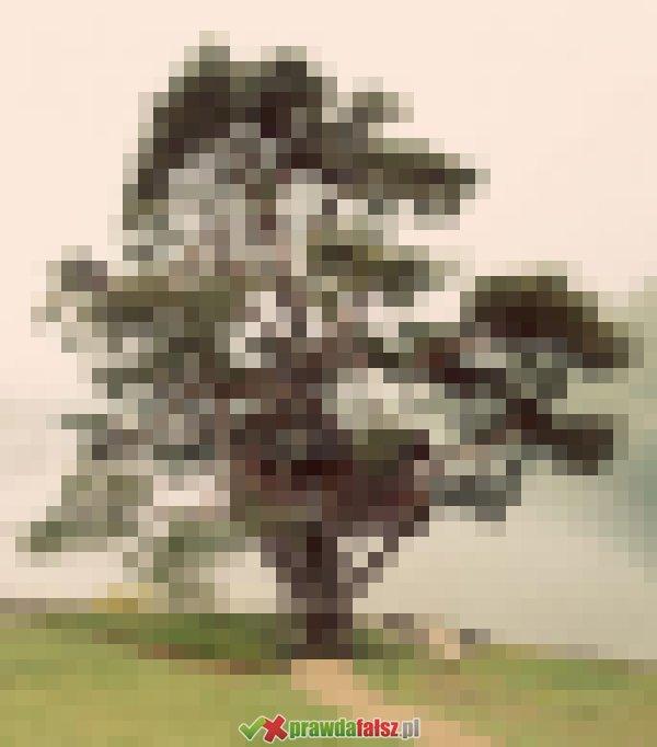Przedziwne drzewa